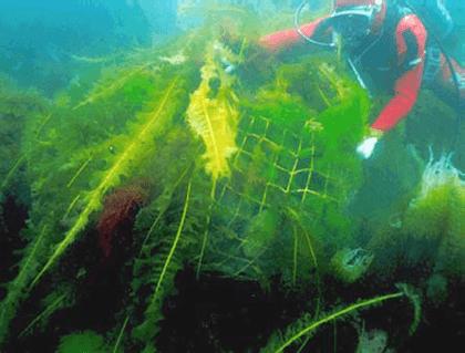 Rock bag in sea water